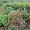 刈草を使った腐葉土のつくり方。