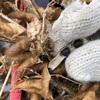 種蒔いて放置してた黒千石の収穫から投資を考えてみる