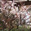 『 弥生三月 』