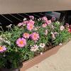 春に向けて花壇の準備 ヤフオク!で購入するとまとめ買いで質の良い苗が購入できます!