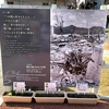 原爆投下で広島は「75年間は草木も生えない」と言われてました。今年はその75年です。そうだ!カンナを植えよう!