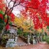 京都・嵯峨野 - 護法堂弁財天の今年一番の赤もみじ。