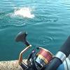 水深が日本一深い漁港は足元でナブラが起きます!(三重県・九鬼漁港)2回目!