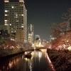 大岡川の夜桜見てきた!