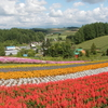 北海道~美瑛(びえい)の丘を彩る花畑に感動した
