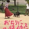 甲斐犬サン、足裏の匂いの件〜変ナトコ、嗅ガナイデェッ💢