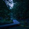 濃溝の滝でホタルを撮影!ゲンジボタルが舞う幻想的な夜だった