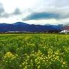 菜の花畑が見頃、道の駅アルプス安曇野ほりがねの里(ほりがね物産センター)。