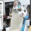 猫雑記 ~すずめのお手伝い~