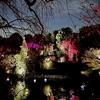 目白庭園の「紅葉ライトアップ」に行ってきました。