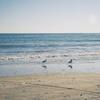 #filmphotography  秋の鎌倉散歩から 長谷寺〜由比ヶ浜