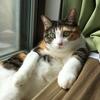 【愛猫日記】毎日アンヌさん#60