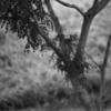 9月の写真ーHektor7.3cm f1.9の描写
