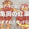 紅葉の落ち葉アートに超穴場スポット!亀岡の紅葉おすすめスポット6選
