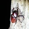 🌕夜の森でカブトムシ採集しました☺