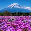 見頃の富士山&芝桜を撮影!絶景を堪能できる見頃はいつ頃?「富士芝桜まつり」【山梨 観光】