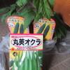 ゴーヤ苗とオクラ種を買いました。