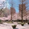 4月2日〜8日★春のキャンペーン