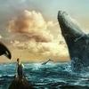 【トリビア】なぜクジラは座礁するのか?