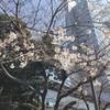 今週のマライヤ(3/15~3/21)
