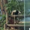 🐼と🦍 赤ちゃん 上野動物園