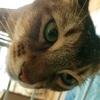 猫の熱中症!?