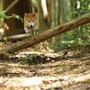 森の中でアジリティー