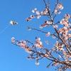 一つの俳句に一つの季語という原則と、季重ね、季違い