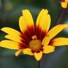 気晴らしカレーと庭の花
