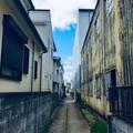 路地裏猫街道