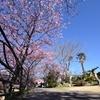 ひと足早いお花見!「河津桜」を見てきました