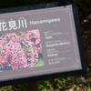 花見川 2014春 京成バラ園