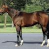 【価格・人気以上に走る・稼ぐ出資馬を探せ!】キャロット2021募集馬の穴狙いはこのゾーン【B・B-】