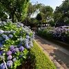 📷白山神社の紫陽花を超広角レンズで撮影しました☺