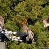日本 電柱に集まるトビ