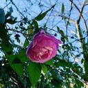 花と空と、リモンチェロ Flower, Sky, and Limoncello