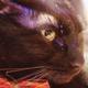今日の黒猫モモ&白黒猫ナナの動画ー639