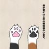 我が家の猫①(モーちゃん)