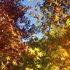 霊園風景 その43   「‥散りゆく 秋」