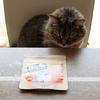 ねこファインで腸活|腸内環境を整える猫用の乳酸菌サプリメントで長寿にゃんを目指そう!