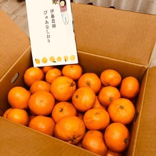 創業120年の柑橘専門農園「伊藤農園」でみかん購入