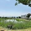 【尼崎の子連れおすすめスポット】東部浄化センター屋上広場は水処理施設の屋上に芝生やグラウンドあり!