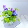 お花の写真を綺麗に撮るポイントとは?撮影に使えるアイテムも!