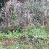 花ユズ、アメリカフウ、春風、モッコウバラ、植樹