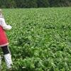 国会上程された種苗法改定案−コロナウイルスと食料安保1