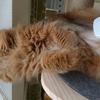 猫のブラッシング 嫌がられない方法は!