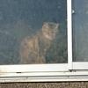 今日は猫屋敷。行きました。