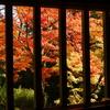 紅葉が最盛期