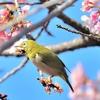 季節の花(「梅」図鑑)