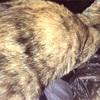 ハル、猫の背中に癒されて、、、。